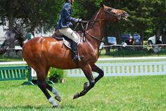 L'enrênement - Un cheval avec une martingale fixe