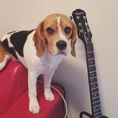 Can I try this guitar daddy?