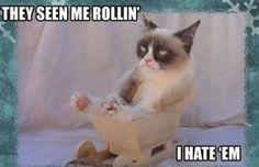 44. Rollin' - The 50 Funniest Grumpy Cat Memes | Complex