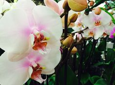 Mostra delle orchidee.