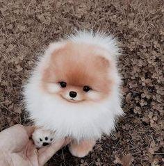 Cute Animals Puppies, Cute Wild Animals, Baby Animals Pictures, Super Cute Animals, Fluffy Animals, Cute Little Animals, Cute Animal Pictures, Cute Funny Animals, Cute Fluffy Dogs