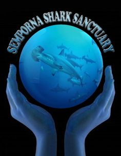 Stop Shark Finning - Keep sharks in the ocean and out of the soup.