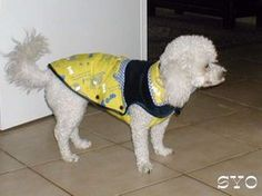 Dog Clothes Patterns, Jessie, Pull, Dogs, Animals, Autumn, Dressed Up Dogs, Small Dog Clothes, Animales