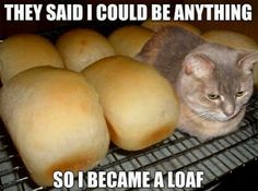 Cat Loaf (20 pieces)