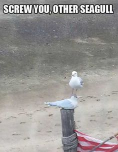I usually feel like the other seagull