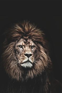 Explore a bathroom inspired by king-of-beasts boldness. http://bold.kohler.com/tagged/biggame