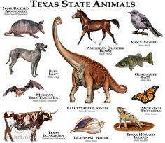 by Roger D Banded Armadillo (animal), Texas Longhorn (mammal), Blue Lacy (dog), American Quarterhorse (horse), Northern mockingbird (bird).home to 159 native mammals & 477 birds Animals Of The World, Animals And Pets, Cute Animals, Extinct Animals, Prehistoric Animals, Texas Animals, American Quarter Horse, Animal Posters, Animal Species