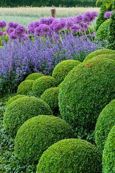Green / Purple