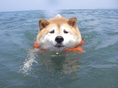 dog at sea 11