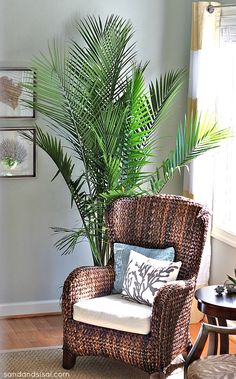 Love this chair (pottery barn?), pillow, wall color, rug and PLANT! Majesty palm… ~dc Source by debbiak . Indoor Palms, Indoor Trees, Plants Indoor, Tropical Home Decor, Tropical Houses, Tropical Colors, Tropical Furniture, Small Furniture, Majestic Palm