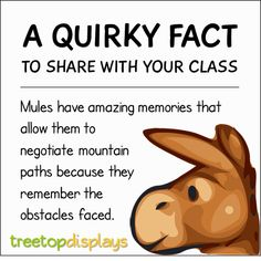 A quirky fact about mules to share with your class - from Treetop Displays. Visit our TpT store for printable resources by clicking on the provided links. Designed by teachers for Pre-Kindergarten to Grade. Fun Facts For Kids, Fun Facts About Animals, Animal Facts, Teaching First Grade, Primary Teaching, Unusual Facts, Weird Facts, Science Classroom, Classroom Activities