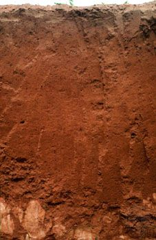 Lixisol soil (WRB) - tropical soil with low clay content