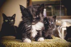 Bad ass kitten gang.
