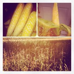 One of the top 10 reasons I love living in the country and being married to a farmer! Sweet corn!!