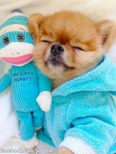 Puppy & his little Monkey