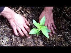 Farm Gardens, Vegetable Garden, Seeds, Stuffed Peppers, Vegetables, Youtube, Plants, Lawn And Garden, Vegetables Garden