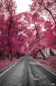 Pink autumn by Merche Portu , via 500px