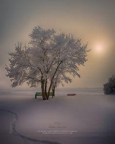 Winter Beauty - Yorkton, Saskatchewan, Canada by Jan McGregor