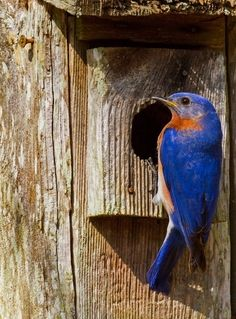 How to Attract Birds That Eat Mosquitoes and Bad Garden Bugs