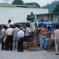 Naju (Jeollanamdo-province), S. Korea: Please crack down on illegal dog slaughter & auction market immediately!