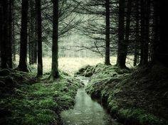 Magníficos bosques de cuentos de Hadas/Terror