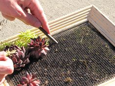 tutorial for a succulent plant frame to hang on wall