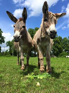 Places Animal Lovers Should Visit this Year 8 Little Known Places in Michigan where Animal Lovers Should Go Wild Animal Sanctuary Colorado, Wild Animal Rescue, Farm Animals, Cute Animals, Detroit Zoo, Swimming Pigs, Michigan, Wildlife, Creatures