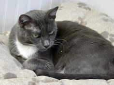 Jasmine is a sweet girl who hasn't had a home of her own for a very long time. Rescued from BCAS.