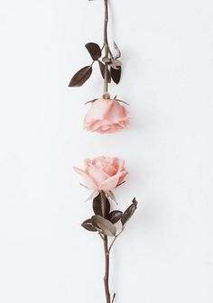 Ideas for flowers pink roses beautiful Cute Wallpapers, Wallpaper Backgrounds, Iphone Wallpaper, Wallpaper Iphone Tumblr Boho, Rose Wallpaper, Pink Aesthetic, Flower Aesthetic, Aesthetic Wallpapers, Pink Roses