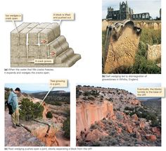 Types of weathering Growing Tree, Geology, England, Weather, Rocks, Image, Google Search, Stone, English
