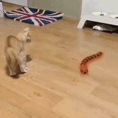 Scary centipede - your daily dose of funny cats - cute kittens - pet memes - pets in clothes - kitty breeds - sweet animal pictures - perfect photos for cat moms Funny Animal Videos, Cute Funny Animals, Funny Animal Pictures, Cute Baby Animals, Funny Cats, Funny Videos, Funny Horses, Small Animals, Humor Videos