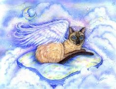 beautiful Siamese Angel cat...on a pillow...in the clouds