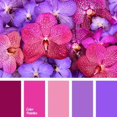 Absolutely striking, marvelous combination. Bright, rich colors carry us along in their magical world of joy and excitement. Fuchsia, lilac, cornflower blu.