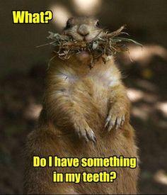 #Funny - squirrel