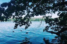 Swim in Berlin: Langer See (Stil in Berlin)