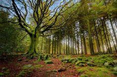 Los bosques más bellos del mundo · El bosque mágico de Broceliande