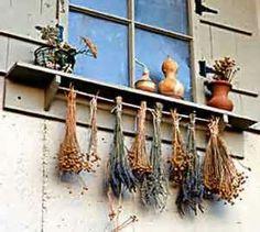 Seasonal Herbs grow in abundance across the countryside in Cyprus. A local Herb drying technique. Herb Drying Racks, Drying Herbs, Hanging Herbs, Types Of Herbs, Tech Art, Garden Projects, Garden Ideas, Medicinal Herbs, Edible Garden