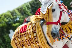 Carrico_Jain_Waterhouse_Studios_Photography_10210. Decorated Baraat horse for Indian wedding