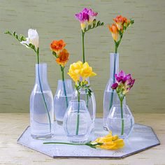 Freesias in glass.