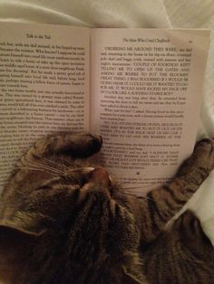 A cat reading one of the bits of my second cat book that isn't about cats and getting slightly irate at an overuse of capitalised speech that it views to be derivative of John Irving's 1989 novel A Prayer For Owen Meany.