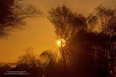 Morning Love, Start The Day, Dog Walking, New Zealand, Tourism, Sunrise, Poetry, Amazing, Nature
