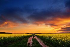 "Sunset photography canola field landscape poster print - nature photo - wall art - ""The Luminous Landscape XXIV"" by Zsolt Zsigmond - SKU0091"