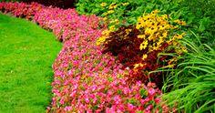 10 erros sobre orquídeas | Jardim das Ideias STIHL - Dicas de jardinagem e paisagismo