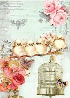Birds and Flowers...