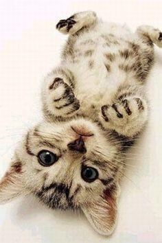Little kitten cuteness