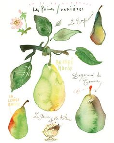 Title : Pears    Archival giclee reproduction print.  Signed with pencil.  Printed on fine art  BFK Rives  hot-pressed paper, smooth surface, 140