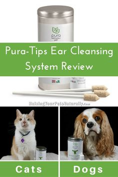 How to clean a cat's ears with the best natural ear cleaner for cats. Dirty dog ears? Check out this great natural ear cleaner from @purapet2015 for dogs and cats. Eco-friendly, organic and non-toxic. Your pets will thank you for it. #sponsored