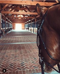 Love this flooring for inside the barn. It would be very easy to get second-hand / used bricks from the tip shop over time to have enough to do the flooring for my barn when time comes to.