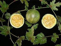 CABACUÍ (Melancium campestre)