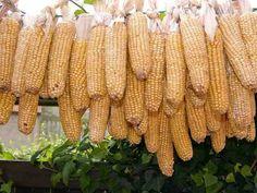 Corn Oil vs Peanut Oil: Similar or Different?